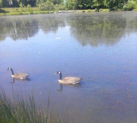 Lakes ponds connecticut fishing regulations 2017 for Ct fishing season